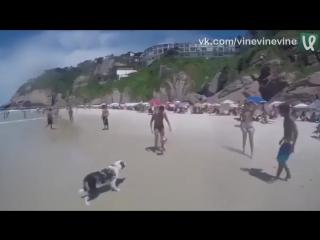 Собакен играет в пляжный футбол