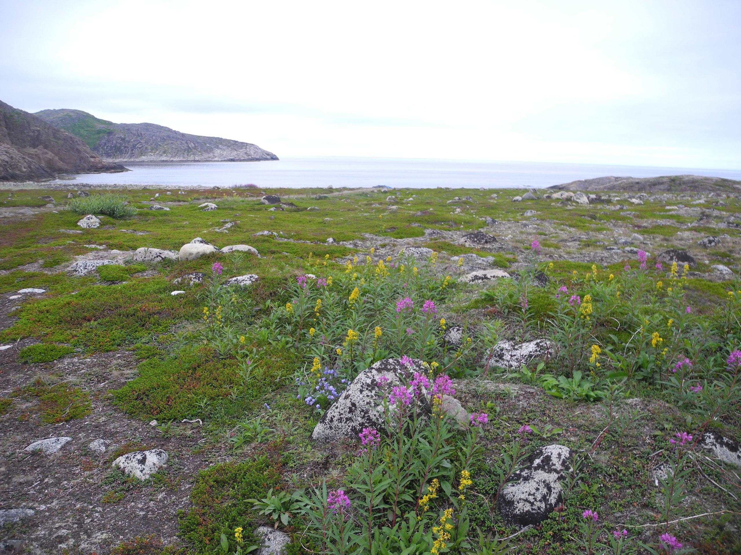 баренцево море северный ледовитый океан