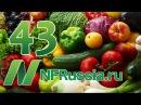 №43 Рейтинг овощей борцов с раком Доктор Майкл Грегер русская озвучка