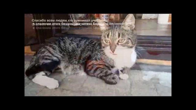 Новосибирцы спасли кота с отрезанными лапами Кот учится заново ходить