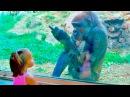 ТЕСТ НА ПСИХИКУ, ПОПРОБУЙ НЕ ЗАСМЕЯТЬСЯ - смешные приколы и фейлы с животными 4