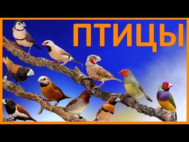 Птицы. Развивающее видео для детей. Учим названия птиц. » Freewka.com - Смотреть онлайн в хорощем качестве