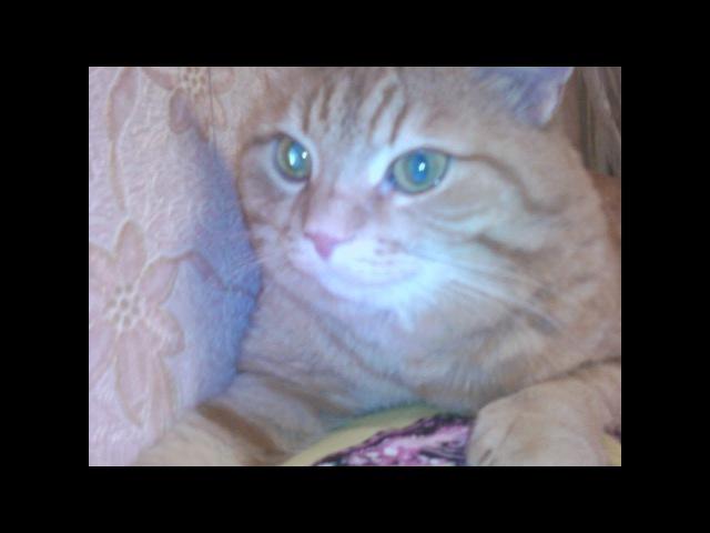 Рыжий кот Кузя ушел на Радугу