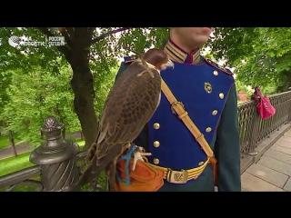 Новый страж орнитологической службы Кремля