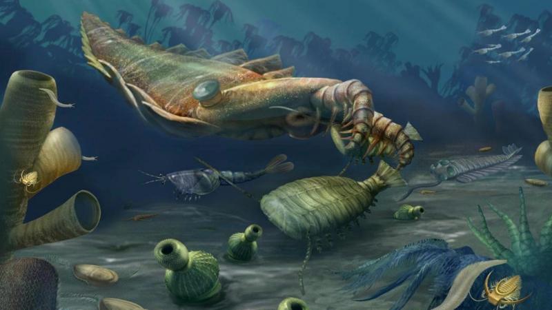 Развитие жизни на Земле (The Evolution of Life) - Кембрийский период (542 - 485 млн.л.н.)