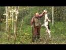 Открытие охоты на зайца.