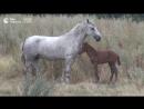 Спасение лошадиной семьи