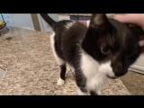 Кот Джек с самым низким в мире «Мяу»