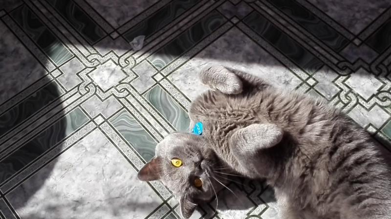 Мой котик декстер