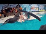 Плавание с дельфинами,