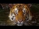 Мир диких животных в 4К