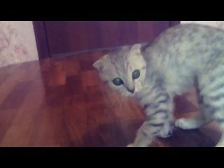 alexandr_bredik video
