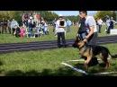 Военно-спортивное многоборье со служебными собаками. Лобовая атака