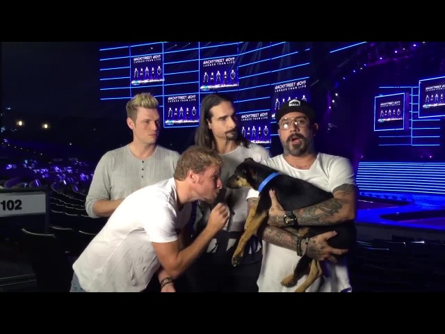 Get tickets to Backstreet Boys' Vegas residency by donating to Animal Foundation