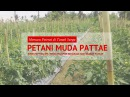 Petani Muda Pattae Memacu Potensi Tanah Surga