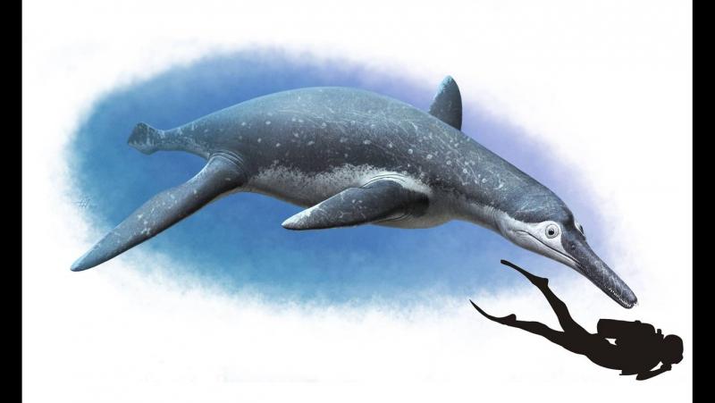 Ульяновское чудище - Плиозавр