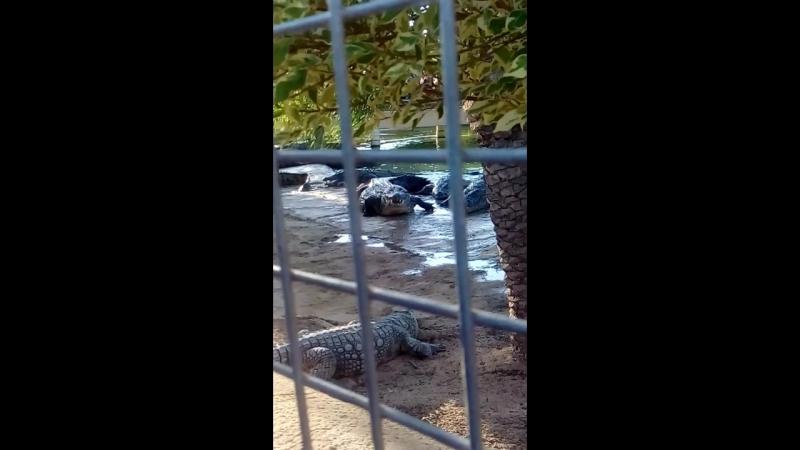 ферма Крокодилов, остров Джерба
