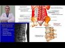 Мышцы Спины укреплять НЕВЕРНО С чего начать Back Pain Еxercises