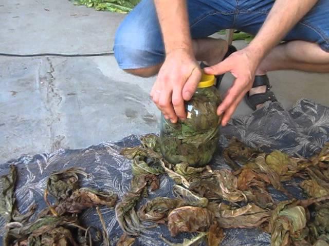 Ферментация табака 1 часть.( tobacco fermentation)