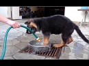 Море Счастья. Щенок немецкой овчарки Рэй. Sea of Happiness. German Shepherd Puppy Ray.