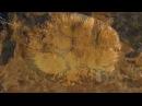 Запретная археология .Радиоактивный Рай под куполом .