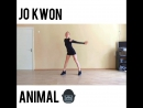 Jo Kwon Animal insta dance cover
