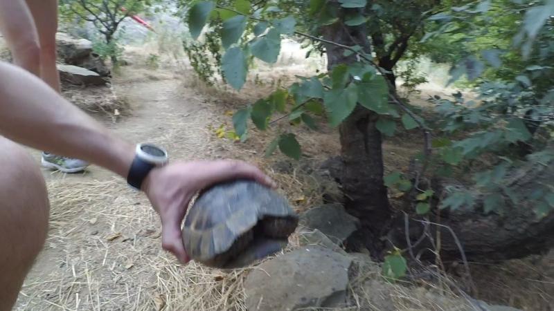 Грузия 2017. Дикие черепахи в горах