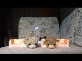 Ток-шоу с котятками 51 выпуск Где выпуски