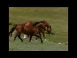 А.Розенбаум - Песня коня цыганских кровей