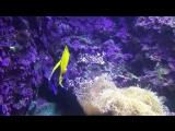 Тропический аквариум - Париж