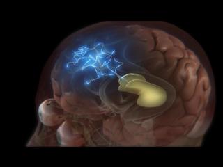 Discovery: Тело человека. Грани возможного.4-я серия.Человеческий мозг.