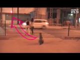 Почему собака ждет зеленого света на светофоре