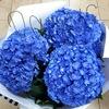"""Оазис"" цветы, букеты, доставка Таганрог 24 часа"