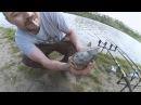 Ловля карпа и карася весной.Рыбалка на донки