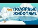 Учим животных для самых маленьких Полярные животные для детей Развивающий мультфильм учим слова
