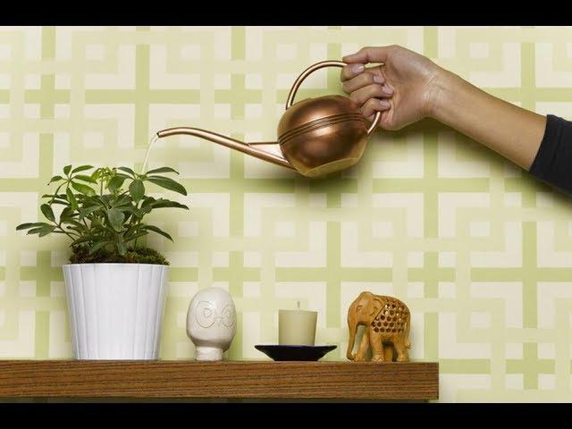 СЕМЬ МИФОВ об уходе за комнатными растениями. Информация для НАЧИНАЮЩИХ ЦВЕТОВОДОВ