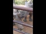 Детеныши носорогов тоже любят ласку