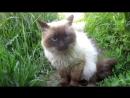 Animal Planet кошачья братва на районе