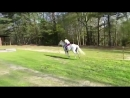 Смешные лошади (август 2017) _ Funny Pet Videos
