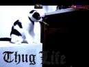 Cat thug life 3 3