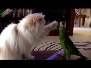 Попугаи и кошки