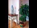 Очень простой автополив домашних цветов