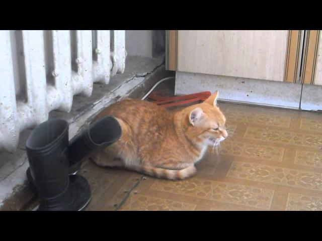 Кот поет песню День Победы