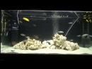 Интерактивный аквариумный туризм Сезон 3 Выпуск 16 Естественный отбор