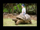Animal Songs - Squirrel,Turtle,Sounds videos for kids