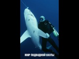 Мир подводной охоты Соревнования в дельте Волги