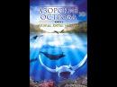 Азорские острова 3D. Часть 1 Акулы, киты, манты