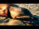 ЗАГАДОЧНОЕ СУЩЕСТВО на Пляже Техаса Идентифицировали / Новости 2017 Уфолог Монстр...