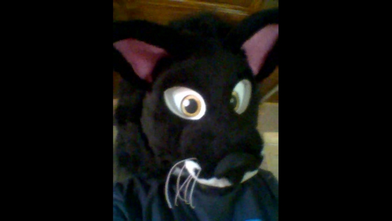 Кот с усами аля Пуаро