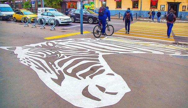 Фото дня: что такое настоящая дорожная зебра